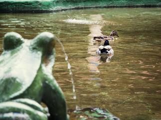 Frog fountain and two mallard ducks