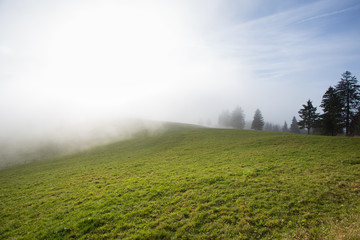 foggy landscape in the black forest, Germany