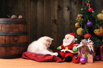 White cat playing with a Santa Claus