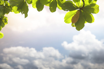 Abstract blurry cloud with leaves frame background