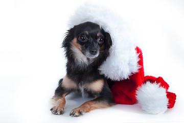 Kleiner süßer Hund mit Weihnachtsmütze