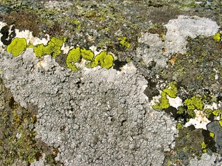 Natural patterned rock with lichen.