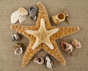 starfish and cockleshells