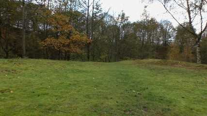 Walking forest meadow in autumn