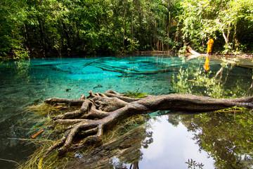 marsh emerald Krabi Thailand