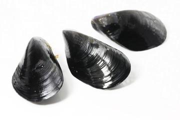 3個のムール貝