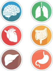 Human Body Organs Icon