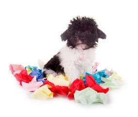 Kleiner Hund in mitten von Papierschnipseln