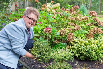 Elderly woman planting heather in garden