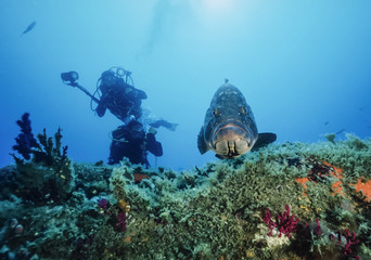 Mediterranean Sea, Corsica, Lavezzi, divers and grouper