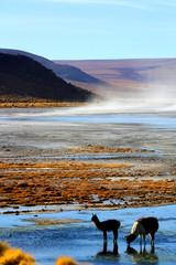 Hochland Boliviens