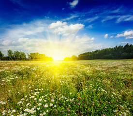 Summer blooming meadow field