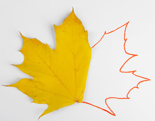 Autumn leaves with painted contour isolated on white