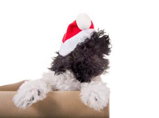 Süßes Hundebaby mit Nikolausmütze schaut aus Karton