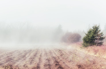 Rural Fog on a farm field