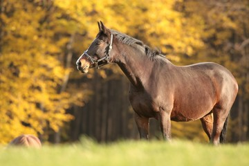 Horse on the meadow in autumn scenery