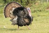 Wild Eastern Turkey