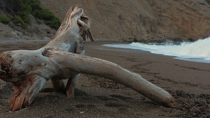 strange piece of drift wood on secluded beach Majorca