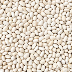 Small Navy, haricot, white pea, white kidney or Cannellini Purga
