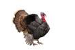 Leinwanddruck Bild - turkey
