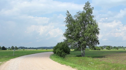 Dirt road, turn in the road. Birch tree standing alone.