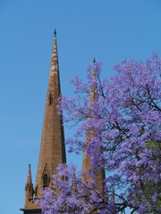 St Patricks cathedral and a jacaranda tree in Melbourne