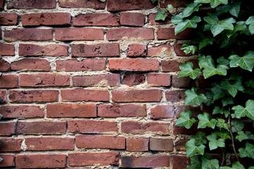 Alte Mauer *** Efeu-2