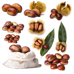 collection chestnuts