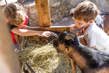 two kids - boy and girl - taking care of domestic animals on far