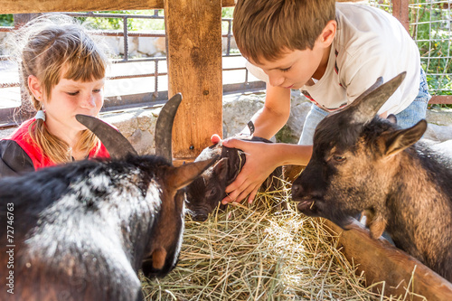 two kids - boy and girl - taking care of domestic animals on far - 72746763