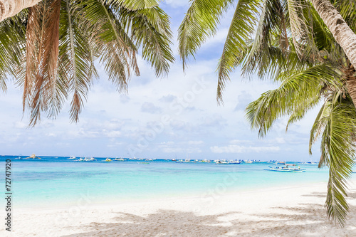 Fototapeta palm trees on tropical beach and sea background, summer vacation
