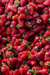 frutta e verdura 8
