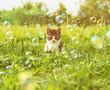 Kitten outdoors at sunny day