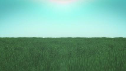 Grass Sunset Green