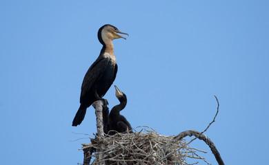 Vogelmutter mit Kind