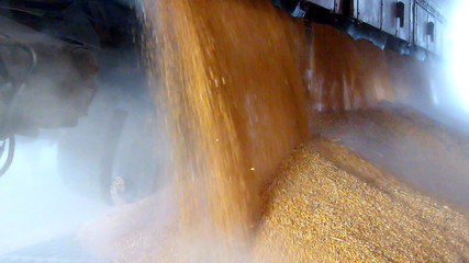 Corn in a silo, slow motion