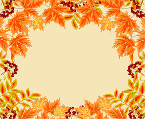 Frame from leaves rowan berry and maple autumn  vector
