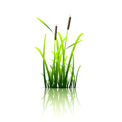 Grass green reed