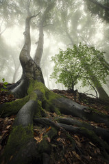 old tree with twisted roots in green forest