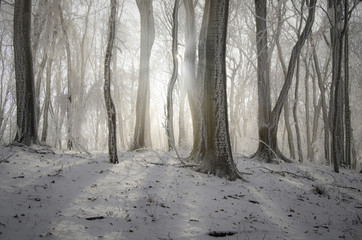 sun shining in misty forest in winter