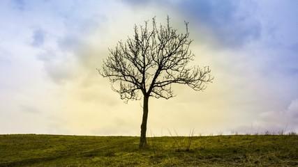 Baum timelapse 06