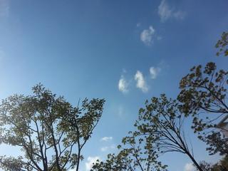 나무와 가을하늘