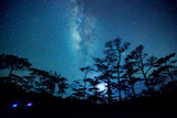 night sky scene in forest with milky way - 72767538