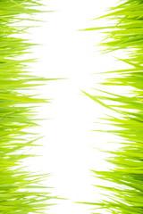 Green grass007