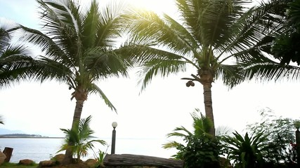 Palm trees at the shore on a background of sunlight. Koh Samui,