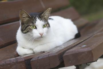 Evcil Kedi