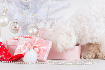 Little dog curious about his gifts