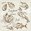 Hand drawn seafood