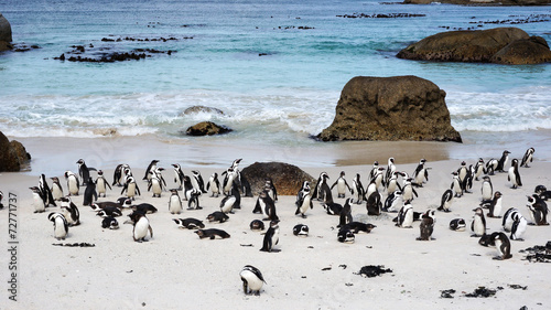 Tuinposter Pinguin African Penguins on Boulders Beach