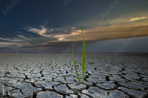 grass new world - 72771770